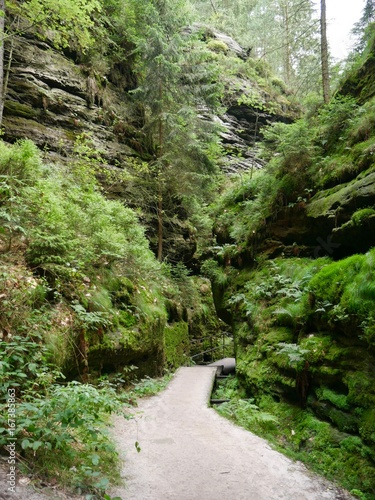 Foto op Canvas Weg in bos märchenhafte grüne Schlucht im Wald