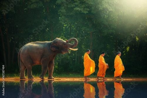 Leinwanddruck Bild Thailand elephant walk behind monks
