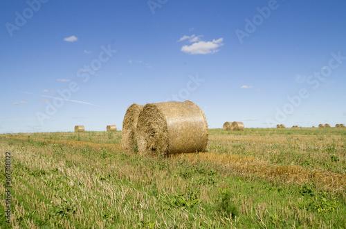 тюки соломы цилиндрической формы на поле после уборки зерновых. Украина