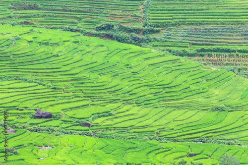 Rice terraces in Sapa