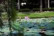 Quadro Lotus pond Viet Nam