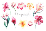 Hand drawn watercolor tropical flower set . Exotic palm leaves, jungle tree, brazil tropic botany elements and flowers. Perfect for fabric design. Aloha design. - 167402044