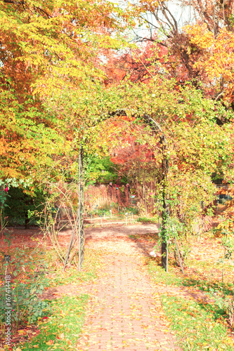 Fall park path with green and yellow trees and fallen leaves, retro toned