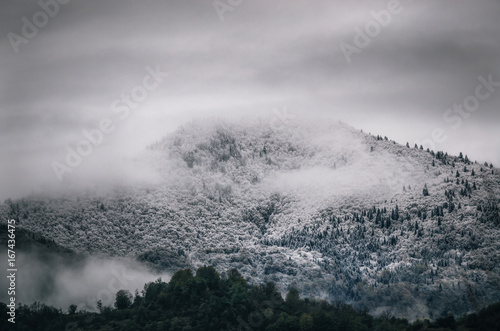 Snowy trees in a fog cloud on the mountain Evergreen Forest in winter Racha Georgia - 167436475