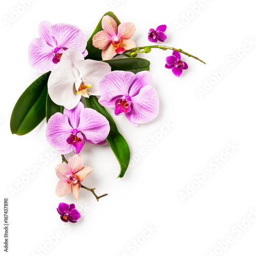 Frame with orchid flowers - 167437890