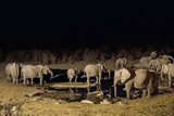 Duża rodzina afrykańskich słoni na krawędzi wody. Nocny widok na wodociąg Moringa zalany jest przez światło. Park Narodowy Etosha, Namibia.
