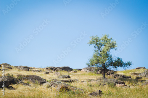 Tree near the stones and dry grass
