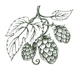 Outline vector sketch of hops branch - 167486064