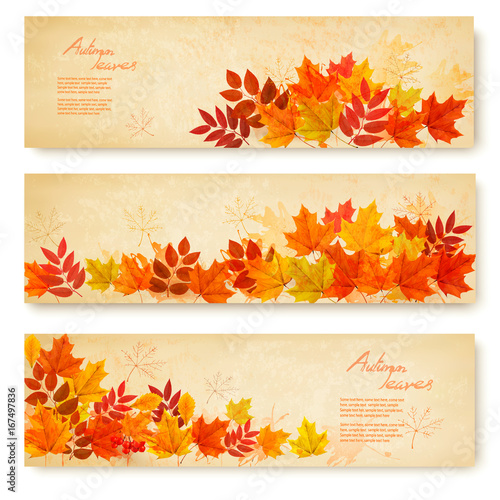 Set of three nature banners with colorful autumn leaves. vector