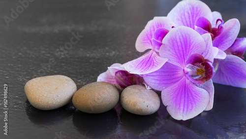 Orchid with massage stones, spa setting with water drops on orchid flower and massage stones