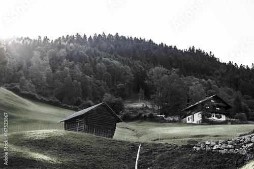 Tuinposter Grijze traf. A morning in the Alps