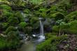 Wasserfall mit Moos 7 - 167552417