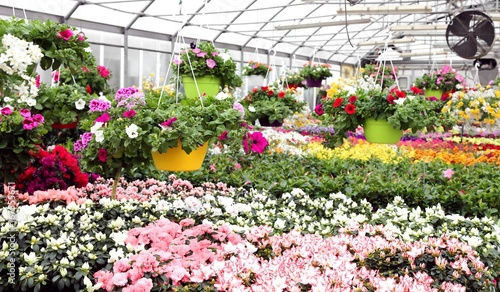 large greenhouse with beautiful flowers and plants for sale in t