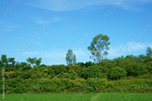 Foto op Canvas Blauw Trees on hill against a bright blue sky