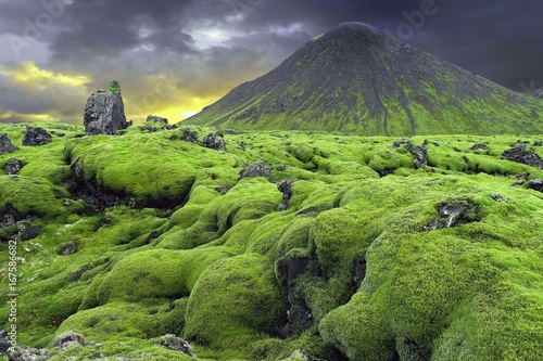 In de dag Pistache Moss on the lava field, Iceland