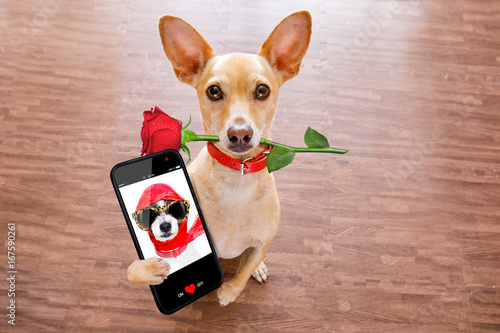 Foto op Canvas Crazy dog valentines dog in love with rose in mouth