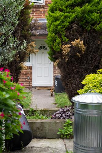 Fuchs im Vorgarten eines Wohnhauses Poster