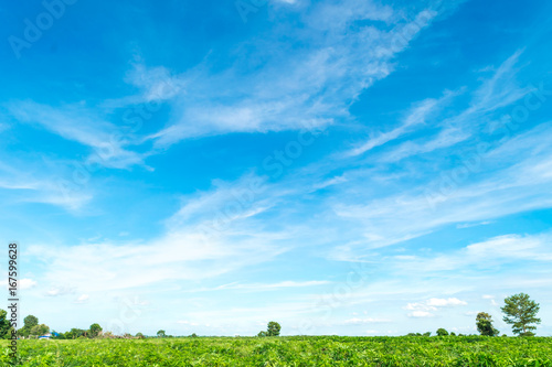 Foto op Canvas Natuur Blue sky and cloud with tree. landscape background.