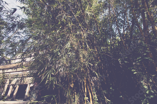 Tuinposter Aubergine Tropical jungle rainforest background on Bali island, Indonesia.