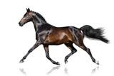Beautiful bay stallion trotting  isolated on white background - 167609606