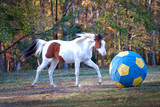 Horse Playing with Ball - 167613836