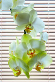 blooming tender orchids as a part of interior