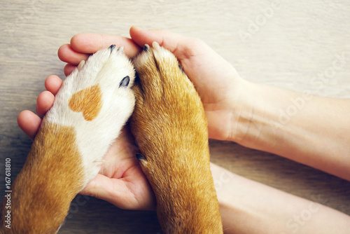 Leinwandbild Motiv Dog paws with a spot in the form of heart and human hand close up, top view. Conceptual image of friendship, trust, love, the help between the person and a dog