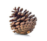 brown pine cone isolated on white background - 167628214