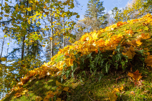 Foto op Aluminium Betoverde Bos Boulders in the forest woods, rocks covered by moss and colorful foliage. Autumn season.