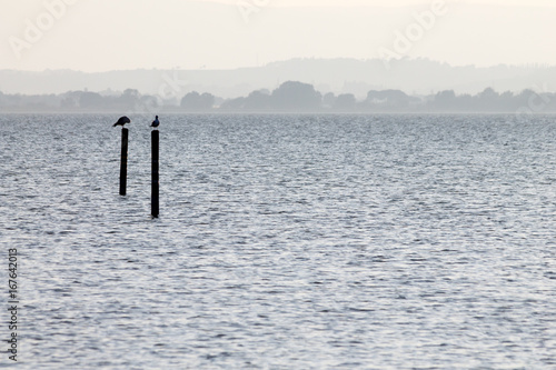 Two seagulls on poles on a lake, with distant hills in the background, and very soft colors, mostly white and light blue - 167642013
