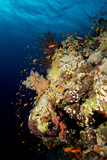 Coral garden in the red sea - 167650213