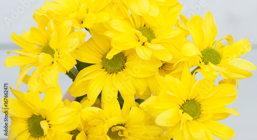 Bright yellow gerbera on wooden background