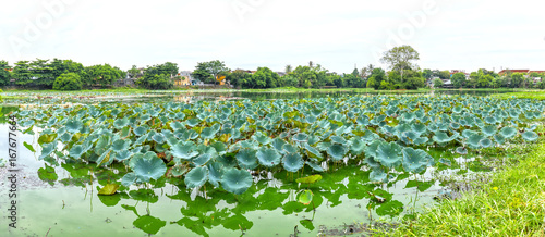 Wall mural Lotus lagoon in the city of Hue