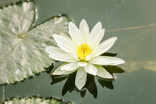 Wall mural Lotus flower on pond at Hanoi