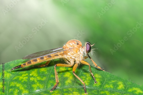 Take a closer shot Robberfly Poster