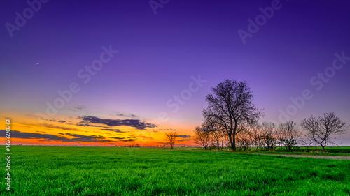 Keuken foto achterwand Snoeien Sunset