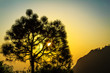 Beautiful Evening view of tree from Vaishno Devi Jammu India