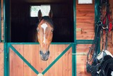 Horse in contemporary stable - 167700204
