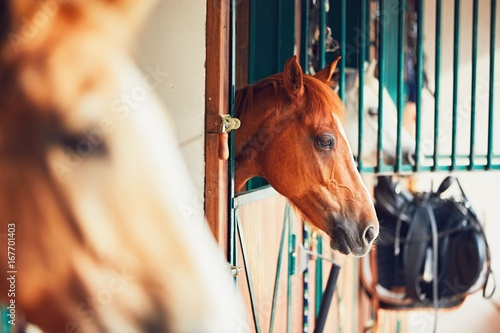 Horses in contemporary stable Poster