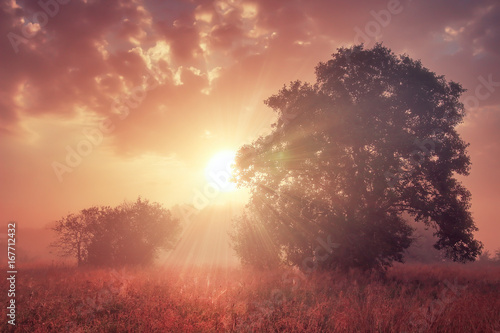 Beautiful landscape of colorful autumn sunrise in the morning on meadow. Sun rays shining through large trees on background of red sky with clouds.