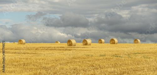 Spoed canvasdoek 2cm dik Oranje Landschaft im Sommer, abgeerntetes Kornfeld mit Strohballen, Panorama