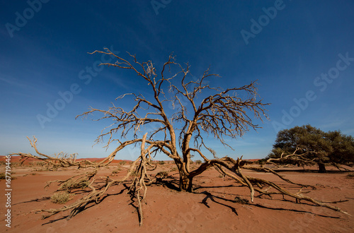Foto op Canvas Nachtblauw Dead tree in the namib desert