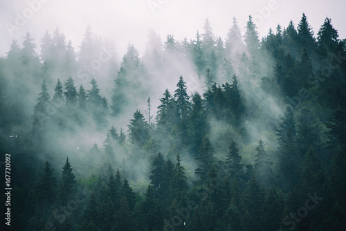 Misty landscape with fir forest in hipster vintage retro style - 167720092