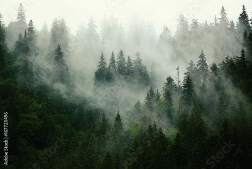 Fototapeta Misty landscape with fir forest in hipster vintage retro style