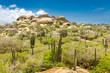 Постер, плакат: Ayo Rock formation and typical cacti in the Arikok national park Aruba
