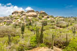 Ayo Rock formation and typical cacti in the Arikok national park, Aruba - 167720663