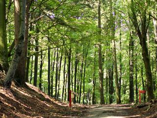 Wald- und Wanderweg  © Richtsteiger