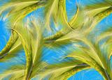 fond palmes de cocotier