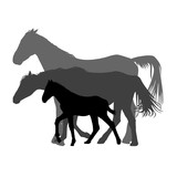 Silhouettes of horses family isolated on white background - 167774235