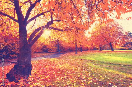 Fotobehang Koraal bunte Landschaft im Park - Herbst